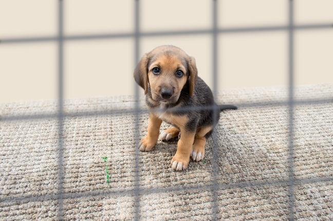 Animal Welfare Fundraising Resource Gathering