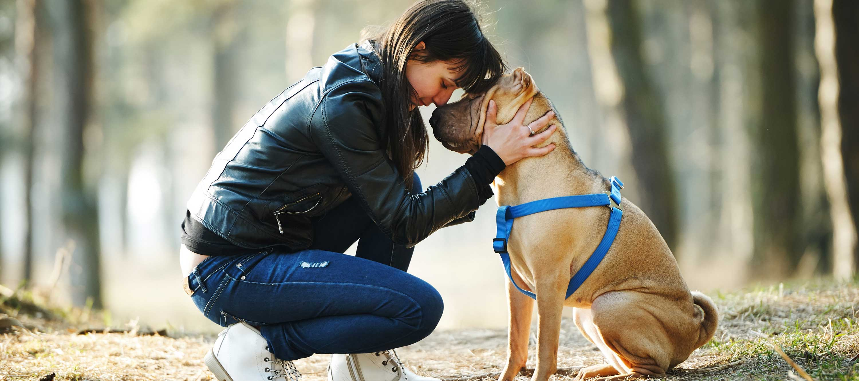 what dogs can teach fundraisers